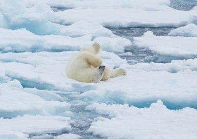North Spitsbergen Polar Bear Special, June © Markus Eichenberger-Oceanwide Expeditions (55)